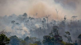 COVID-19 and Amazon Fires Choke the Lungs of Brazilians--and the Planet