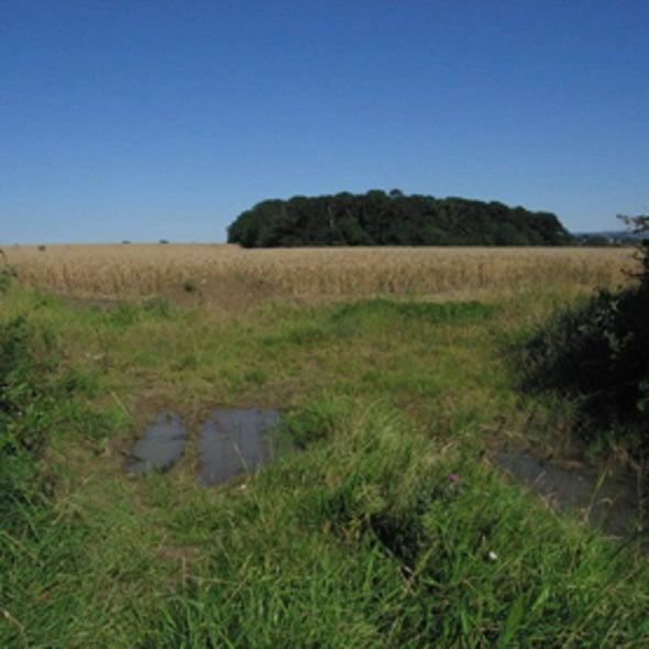 Cellulosic Biofuel Could Revive Farmlands Conservation Program