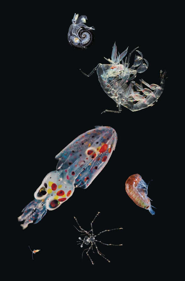 A Multitude of Microscopic Wonders Discovered in the World's Oceans [Slide Show]