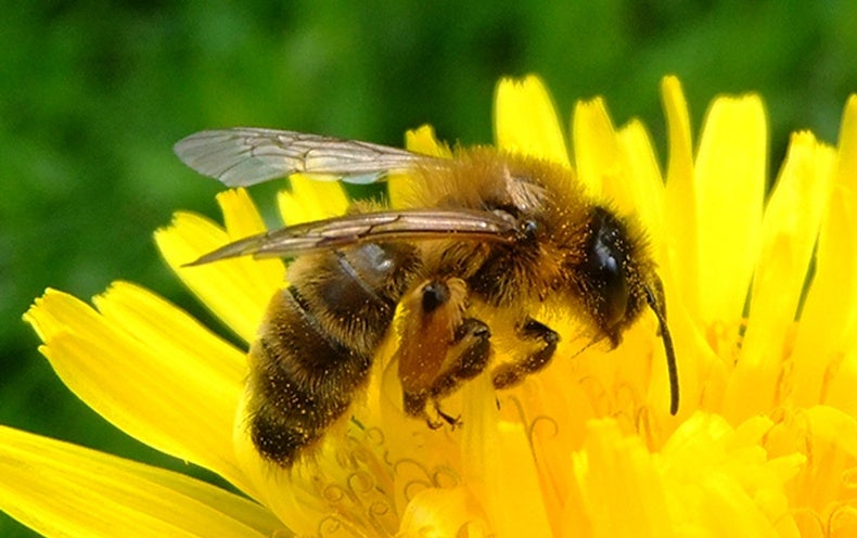 Robo-Bees Could Aid Insects with Pollination Duties