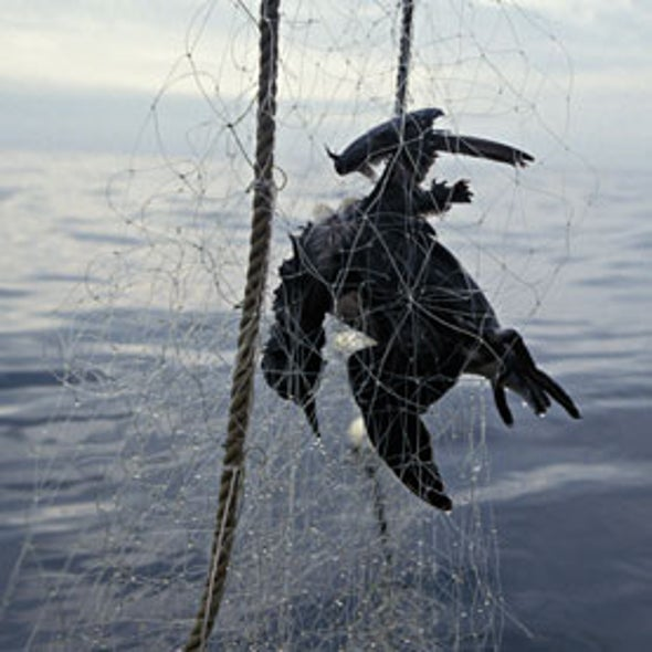 Terrible Toll of Fishing Nets on Seabirds Revealed