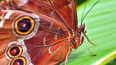 How to Build a Butterfly Wing