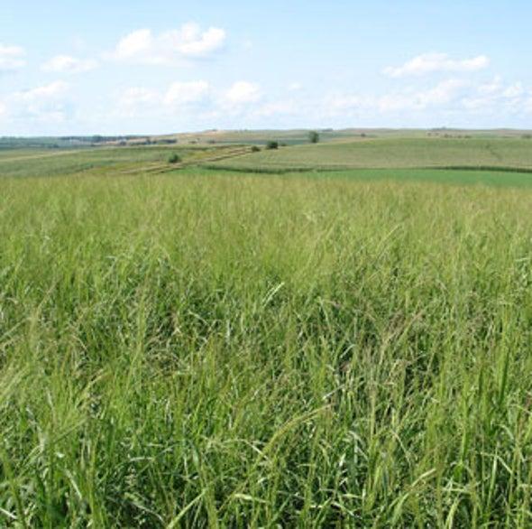 Grass Makes Better Ethanol than Corn Does