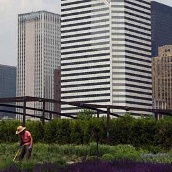 Using Satellites, Researchers Pinpoint Chicago's Urban Gardens