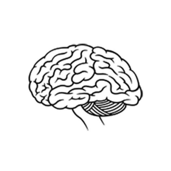 Can Training to Become Ambidextrous Improve Brain Function?