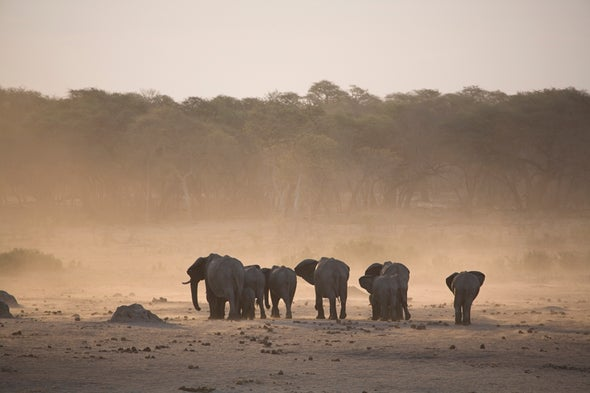 Drought-Hit Zimbabwe Puts Wild Animals Up for Sale