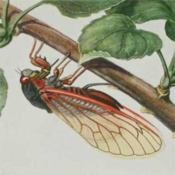 Cicada Tracker