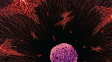 Drugs That Ramp Up the Immune System against Tumor Cells are Revolutionizing Cancer Treatment