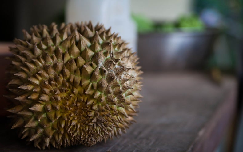How the Durian Got Its Sulfuric Stench