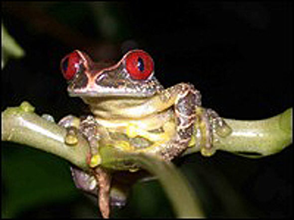 Amphibians Suffering Unprecedented Decline, Global Study Finds