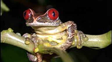Amphibians Suffering Unprecedented Decline, Global Study Finds