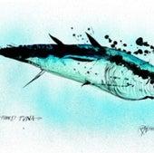 Bluefin Tuna: