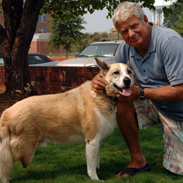 Experimental Prosthetic Surgery to Help One Dog Get a Leg Up