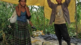"""Biofuels Land Grab: Guatemala's Farmers Lose Plots and Prosperity to """"Energy Independence"""" [Slide Show]"""