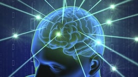 Important Link between the Brain and Immune System Found