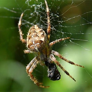 Researchers Build Micro Spider-Silk Spinner