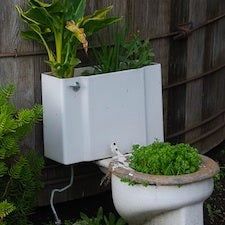 Gee Whiz: Human Urine Is Shown to Be an Effective Agricultural Fertilizer