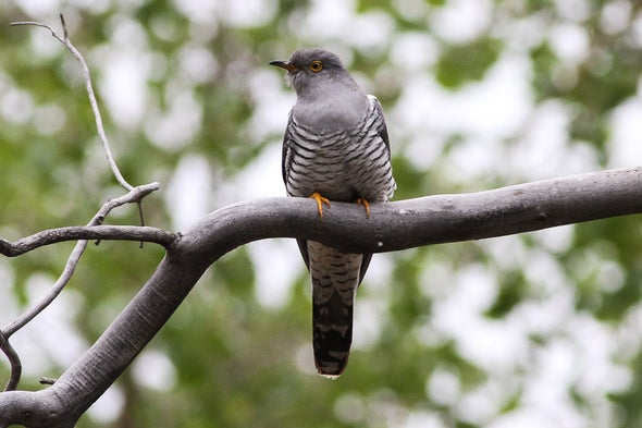 Vagrant Birds May Portend Species Distribution in Climate-Changed World