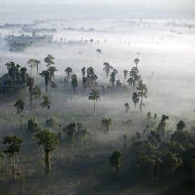 Stop Burning Rain Forests for Palm Oil