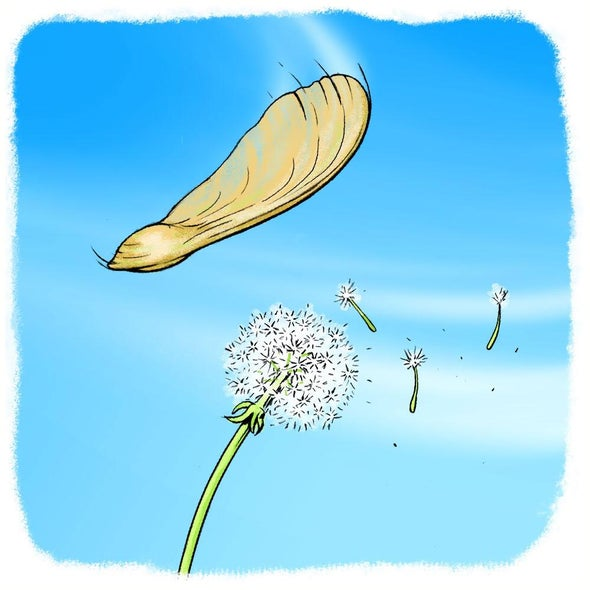 Gone with the Wind: Plant Seed Dispersal