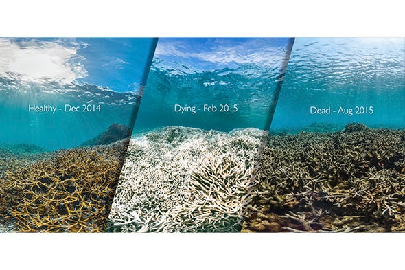 Corals May Get Temporary Reprieve from Bleaching
