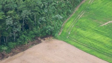 Cutting Down Amazon for Agriculture Could Cut Yields