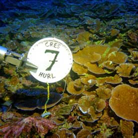 Scientists Urge Preservation of Deep Ocean Coral Reefs