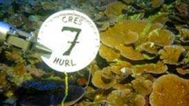 Scientists Urge Preservation of Deep Ocean Coral Reefs