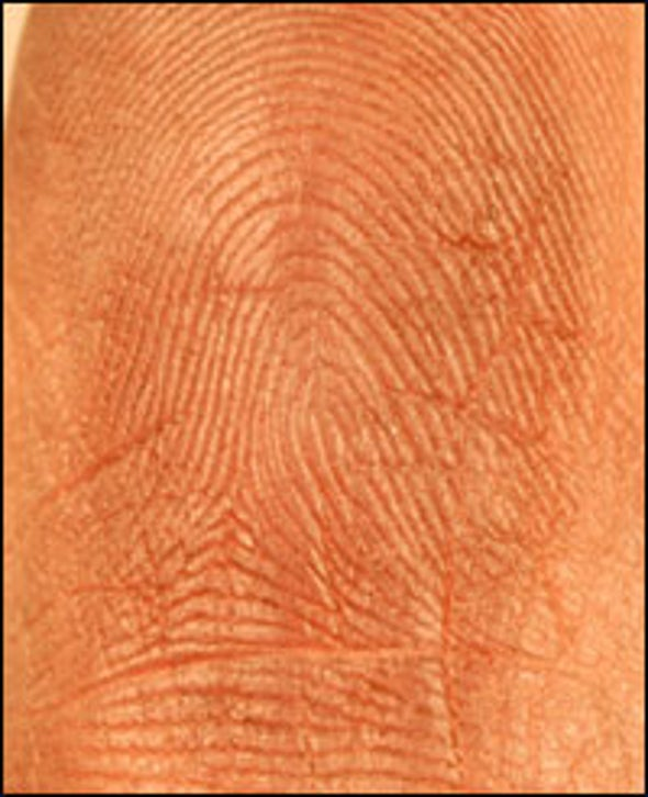 Are one's fingerprints similar to those of his or her parents in any discernable way?