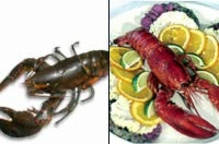 Lobster Shell Color Shift Explained