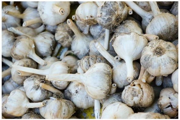 Fact or Fiction?: A Clove of Garlic Can Stop a Vaginal Yeast Infection