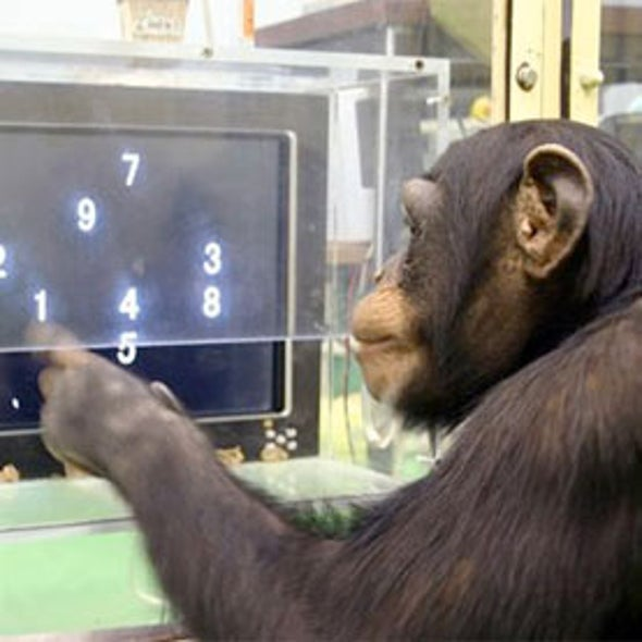 Activists Call for Final NIH Research Chimps to Be Retired