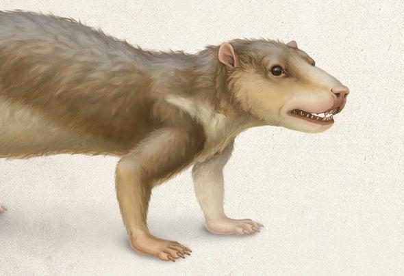 Meet the Early Mammals