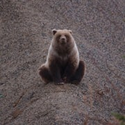 Canadian Grizzly Bears Face Expanded Hunt