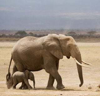 How Zoos Kill Elephants