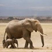 How Zoos Kill Elephants
