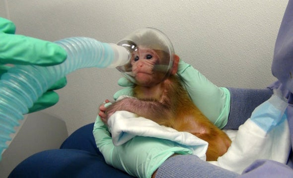 NIH Modifies but Still Defends Experiments on Monkeys