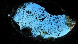 Burned Habitats Benefit Bats