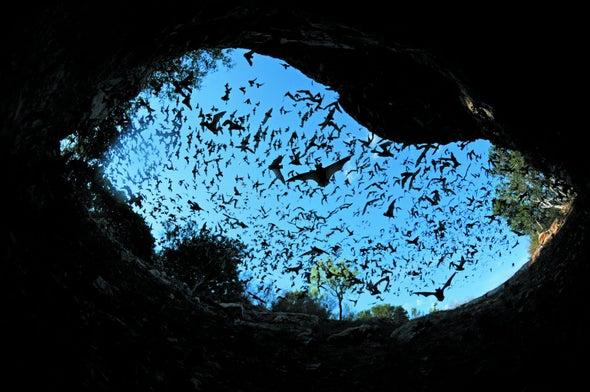 Burned Habitats Benefit Bats