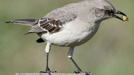 Climate Change Increases Mate-Swapping in Birds