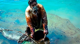 Mauritians Launch Rescue to Save Wildlife from Oil Spill