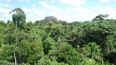 Amazon Rainforest Was Shaped by an Ancient Hunger for Fruits and Nuts