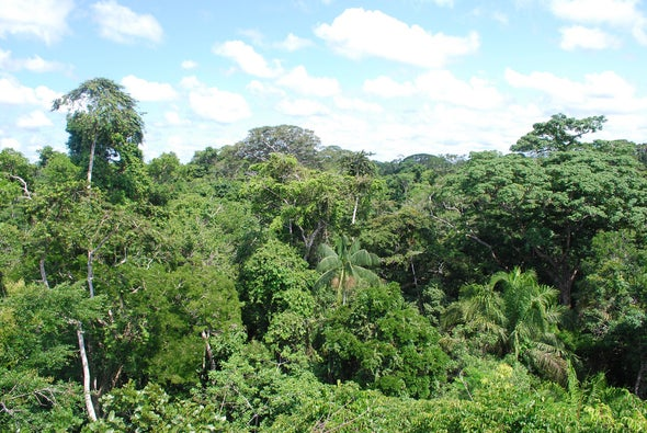 Amazon Rainforest Was Shaped by an Ancient Hunger for Fruits