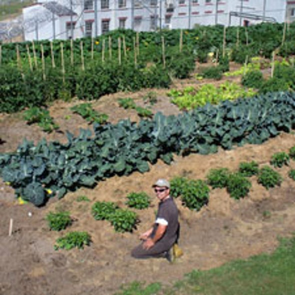 Jailhouse Plot: Some Correctional Facilities Put Prisoners to Work Growing Produce