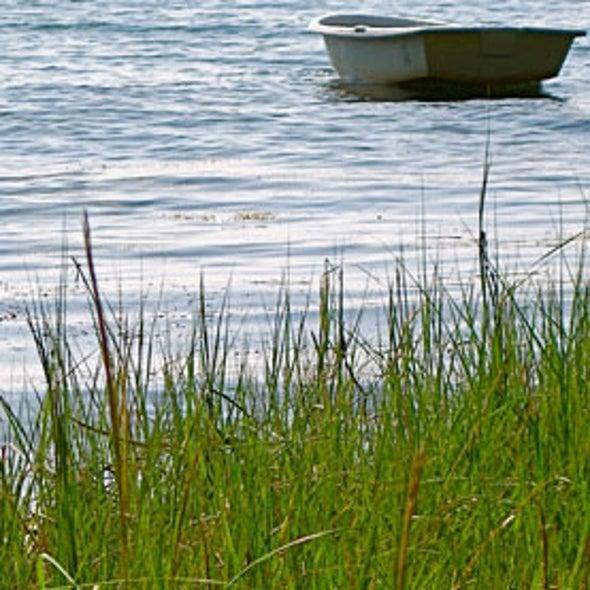 Maine Restores Undersea Plants to Protect Economy