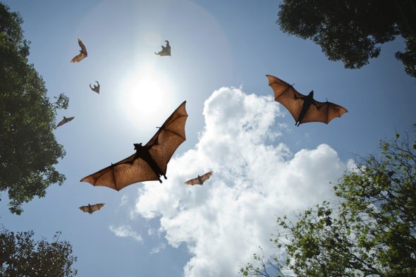 Eavesdrop on Echolocation to Count Bats