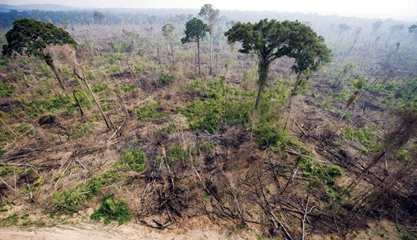 Amazon Deforestation Takes a Turn for the Worse