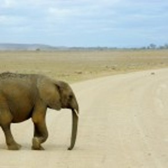 Statistically Speaking: Elephants by the Numbers