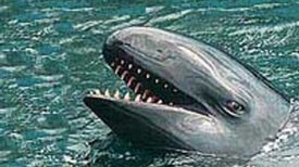 Packaged Whale Meat in Japan Contains High Levels of Mercury