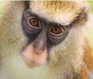 Monkey See, Monkey Speak